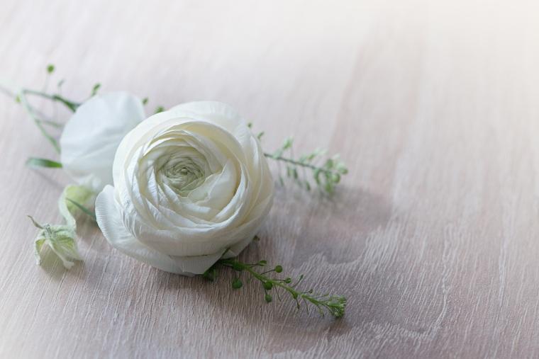 flower-1316753
