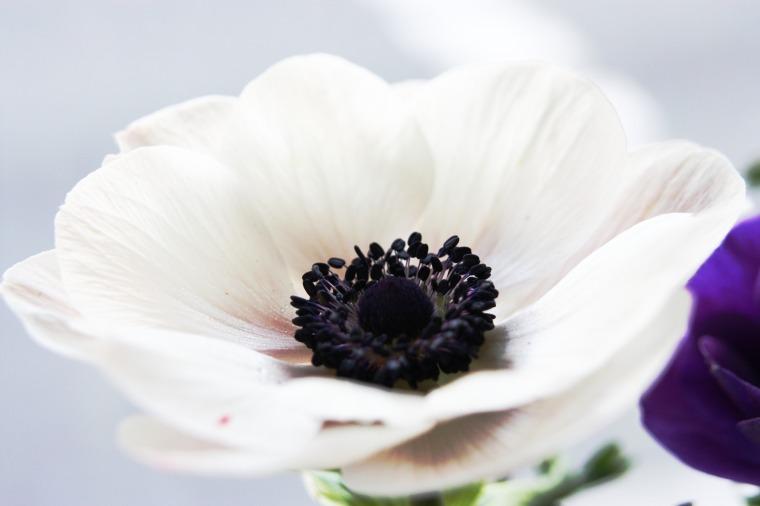 flower-65737